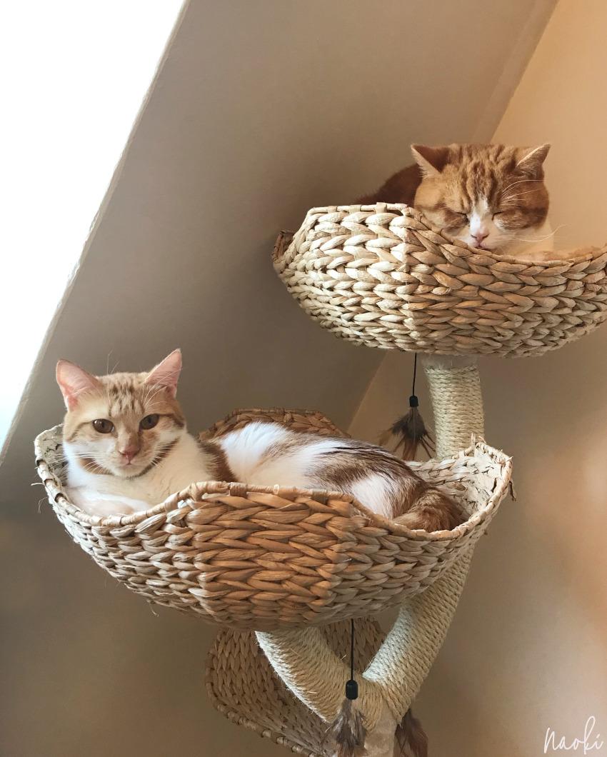 Wat ik heb geleerd van een tweede kat in huis nemen